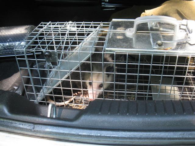 'Possum fer sure